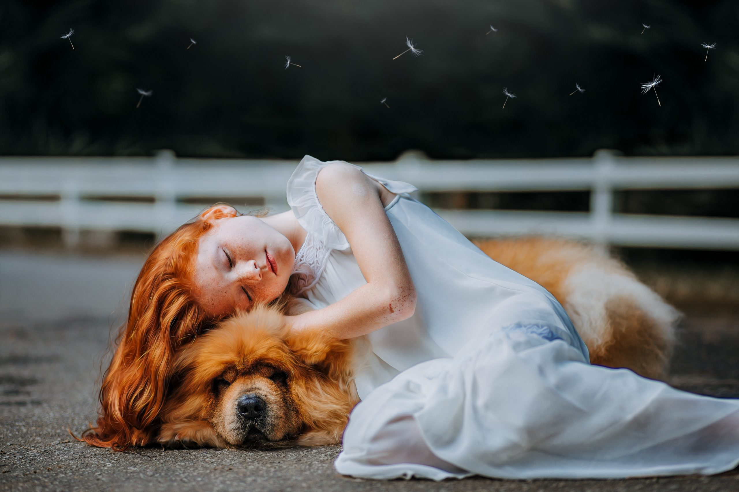 Pet Photography: Why You Should Go With It?