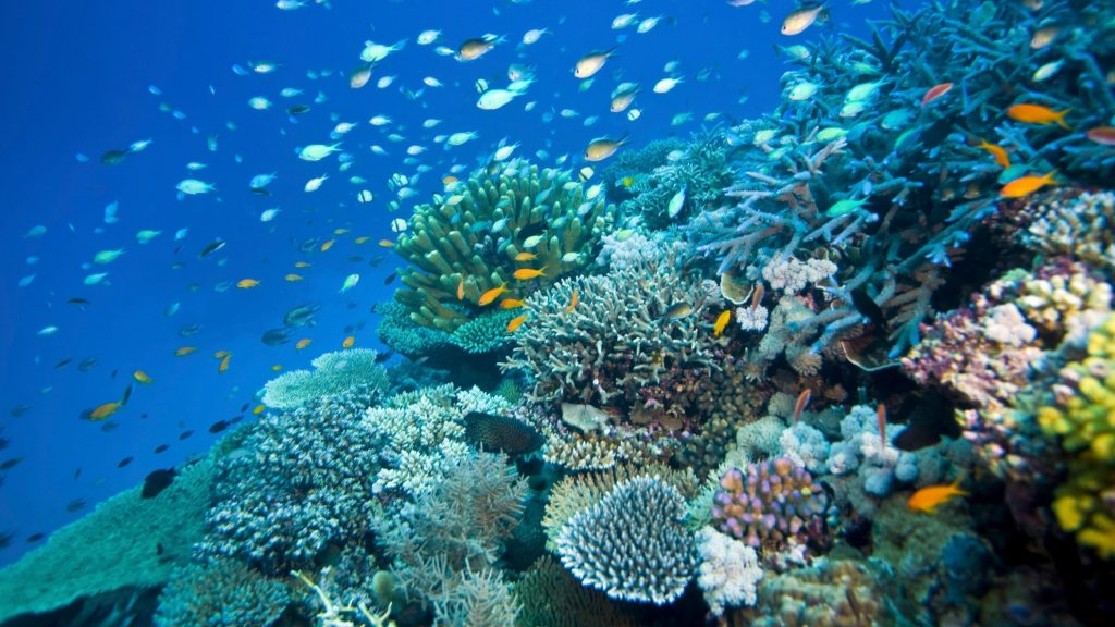 clipping-amazon-Great-Barrier-Reef-world-heritage-sites