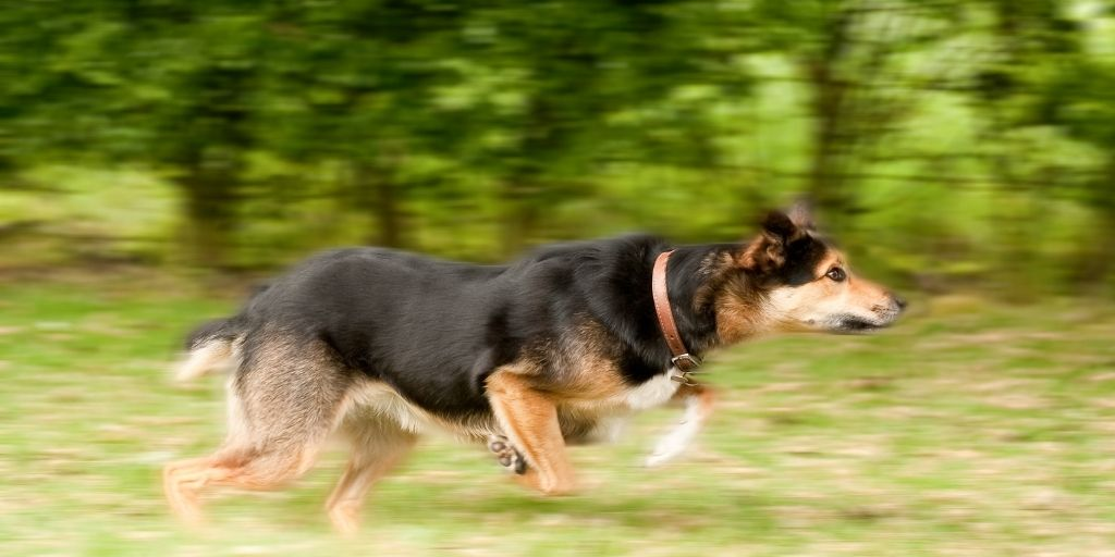 Motion-blur-photography-clipping-amazon
